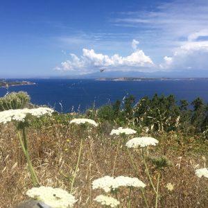 Blick auf Korsika la Maddalena aus