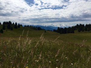 Prati e fiori, monte Peller