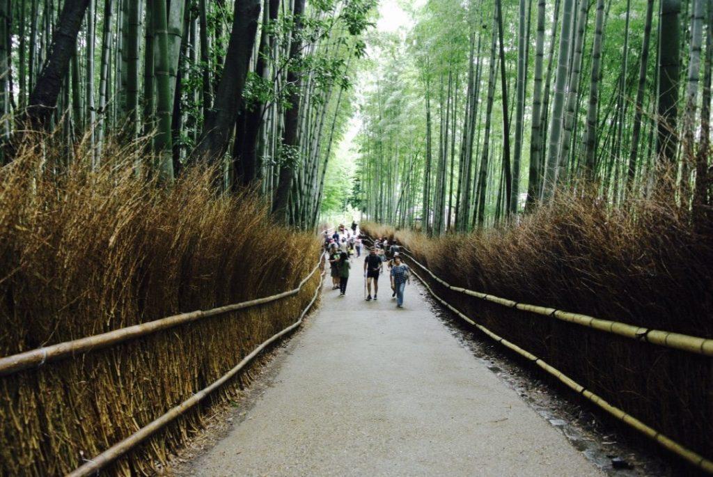 Arashiyama entdecken - Sagano Bambushain