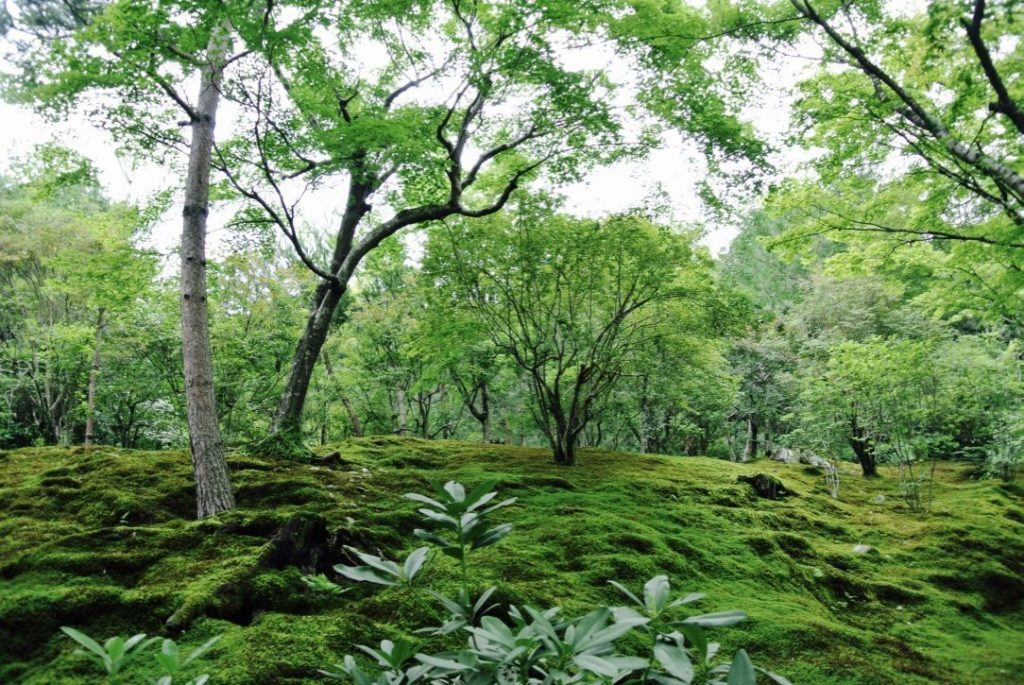 Arashiyama entdecken - Tenryo-ji Tempel