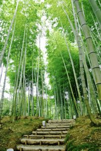 Kyoto erkunden - Bambushain des Kodain-ji