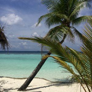 Palme, Sand und Meer - Maledivenfeeling pur entsteht so