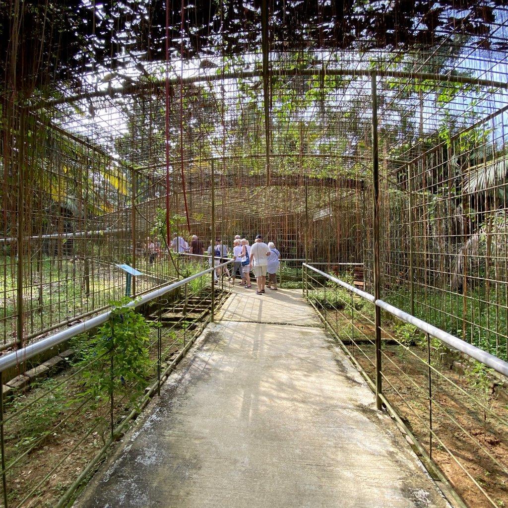 Ausflug von Costa Tours zu den Orang Utans von Bukit Merah, Malaysia