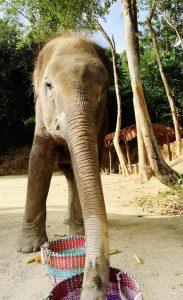 Im Elephant Retirement Park