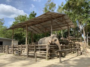 Im Elephant Retirement Park Phuket ein Ausflug zu den Elefanten