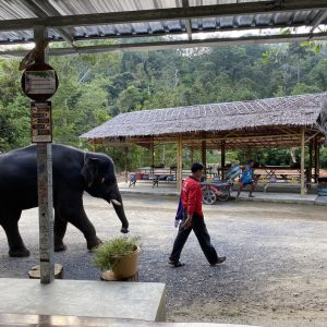 zu Besuch im Elephant Retirement Park Phuket, ein Ausflug zu den Elefanten