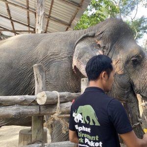 Zu Besuch im Elephant Retirement Park Phuket ein Ausflug zu den sanften Dickhäutern