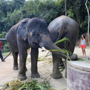 Im Elephant Retirement Park Phuket - Essen fassen