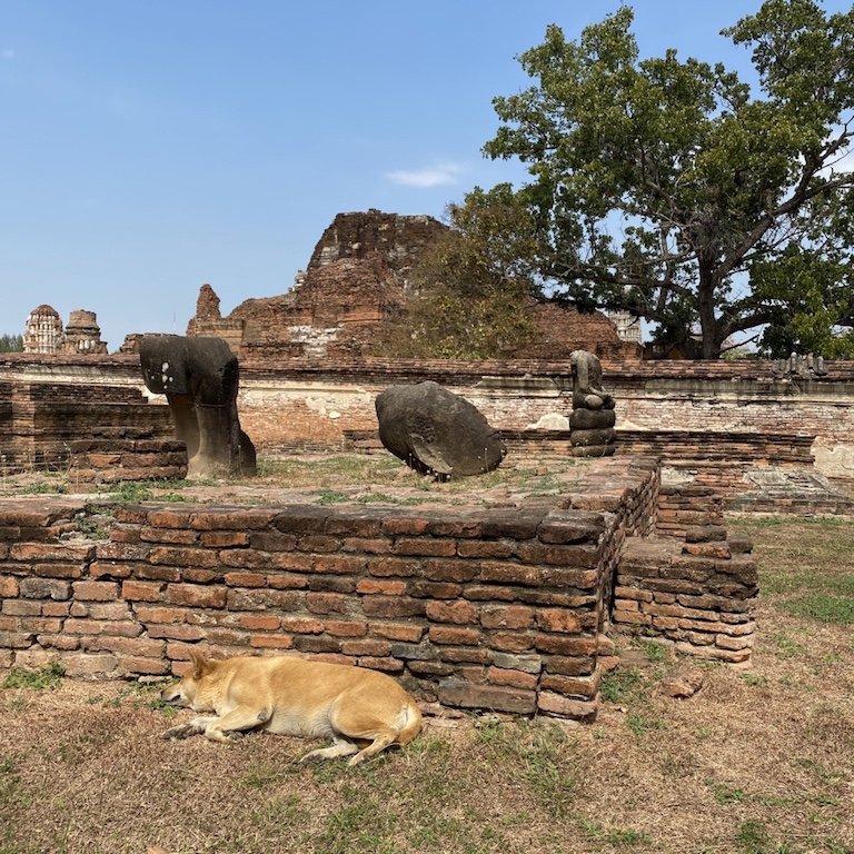 Ayutthaya in einem Tag, nähe Bangkok, Kreuzfahrt Südostasien, Besuch Wat Mahathat, im Tempel