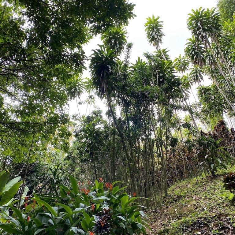 Koh Samui auf eigene Faust entdecken - im Secret Garden