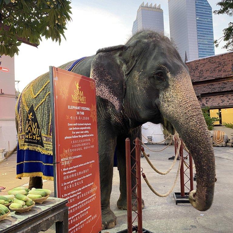 Highlights von Bangkok erleben, Niam Siramit Elefant
