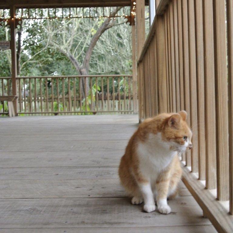 Besuch der Laura Plantation Louisiana Katze