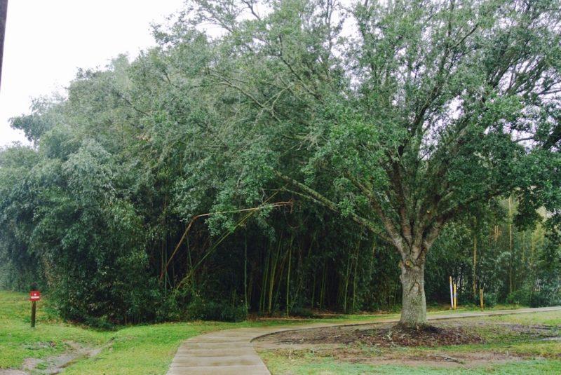 Natur mit Wald und Baeumen auf dem Gelände der Tabasco Fabrik