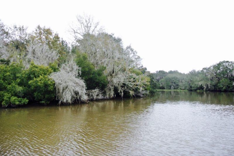 Unterwegs im Feuchtgebiet mit dem Boot und Louisiana Swap Tours, Sicht aufs Ufer und Natur