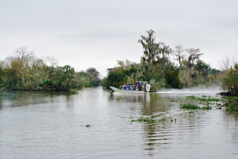 Unterwegs im Feuchtgebiet mit dem Boot und Louisiana Swap Tours, Sicht auf ein Boot, Ufer und Natur mit kleinem Alligator