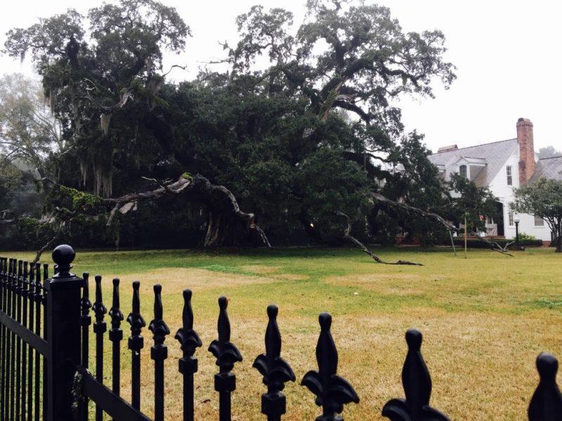 In Louisiana, Riesige Virginia Eiche im Garten mit Zaun in New Iberia zu sehen
