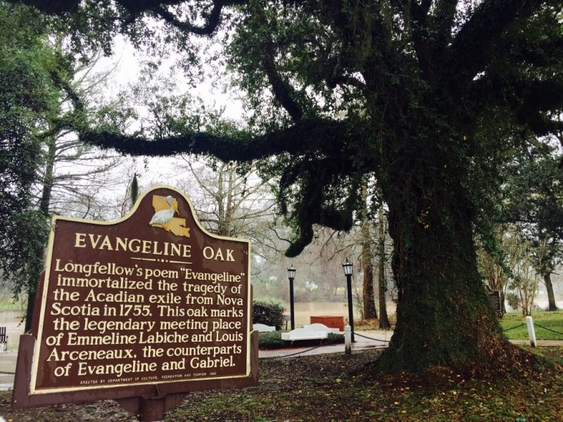 Schild und Evangeline Eiche in St. Martinville in Louisiana