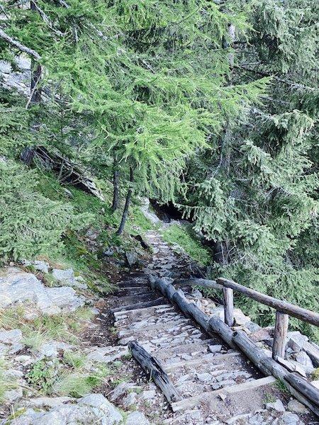 Bäume im Wald und Stufen des Weg 106