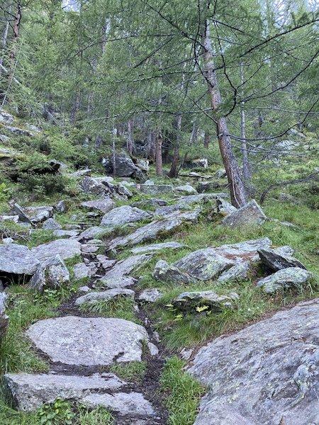 Bäume im Wald und Weg 106
