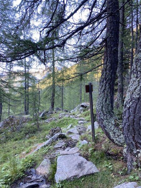 Bäume im Wald mit Pfad 106