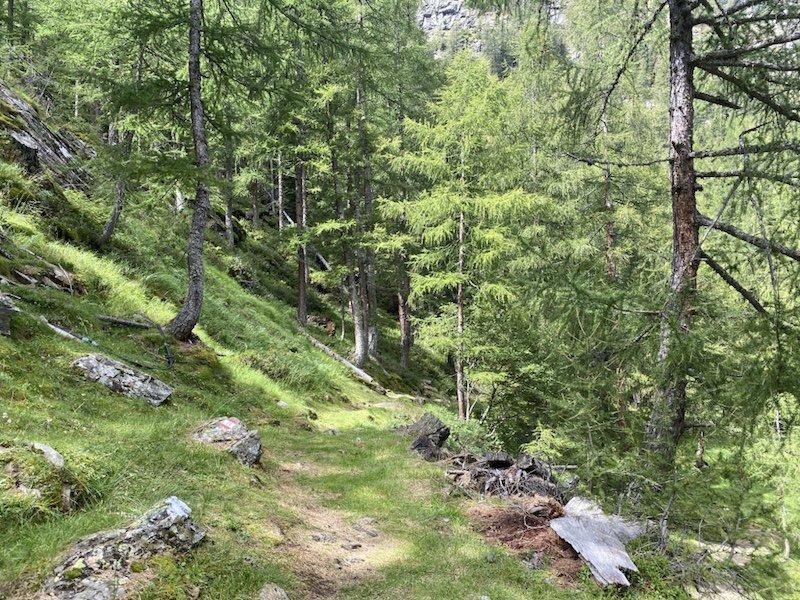 Bäume im Wald mit Pfad 128