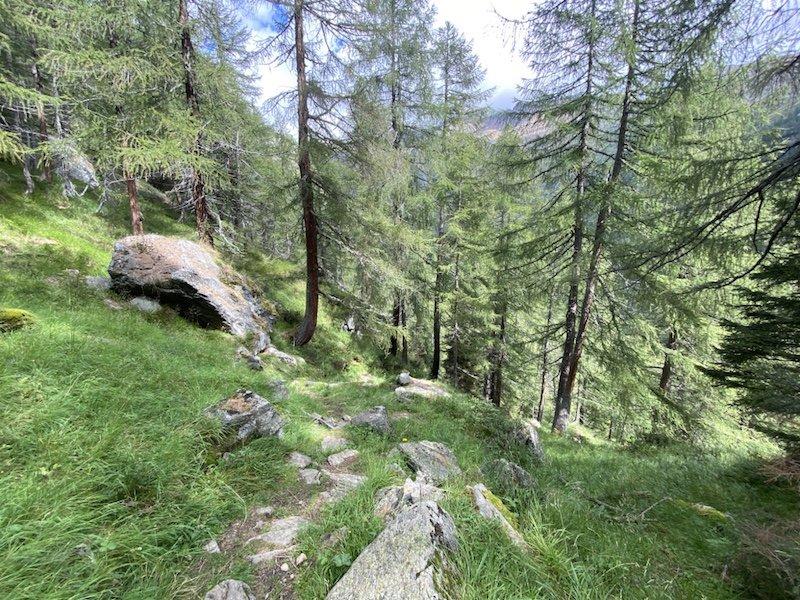 Bäume im Wald mit Pfad