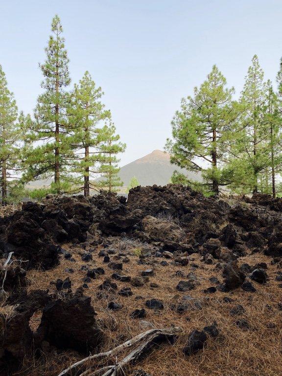 Bild mit Vulkan, Lava und Kiefern im Hintergrund