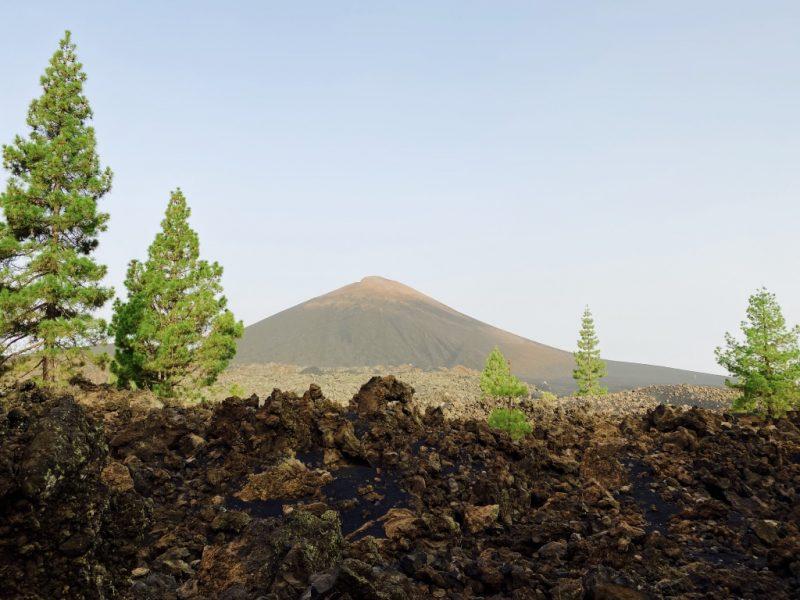 Bild mit Vulkan Chinyero, Lava, Kiefern im Hintergrund