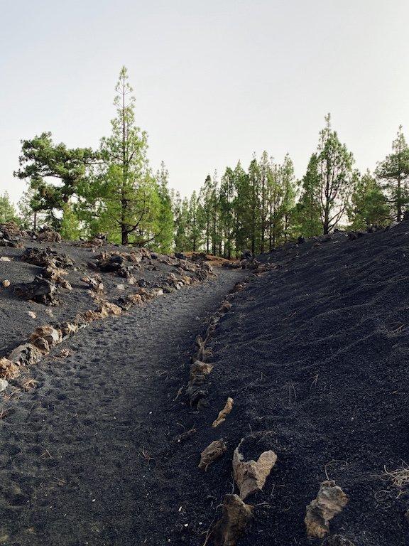 Kiefern auf Lava und Wanderweg