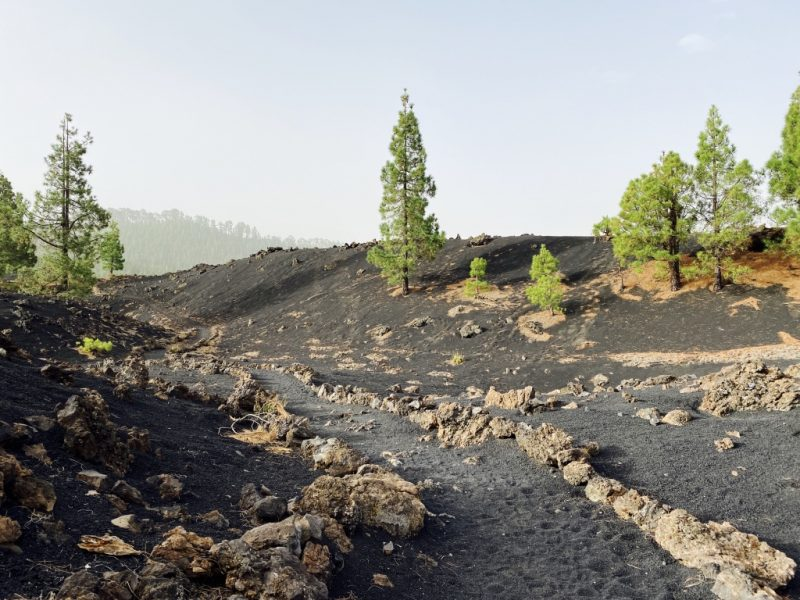 Kiefern auf schwarzer Lava und Wanderweg