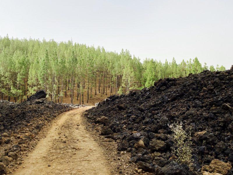 Bild mit Wanderweg, Lava, Kiefern im Hintergrund