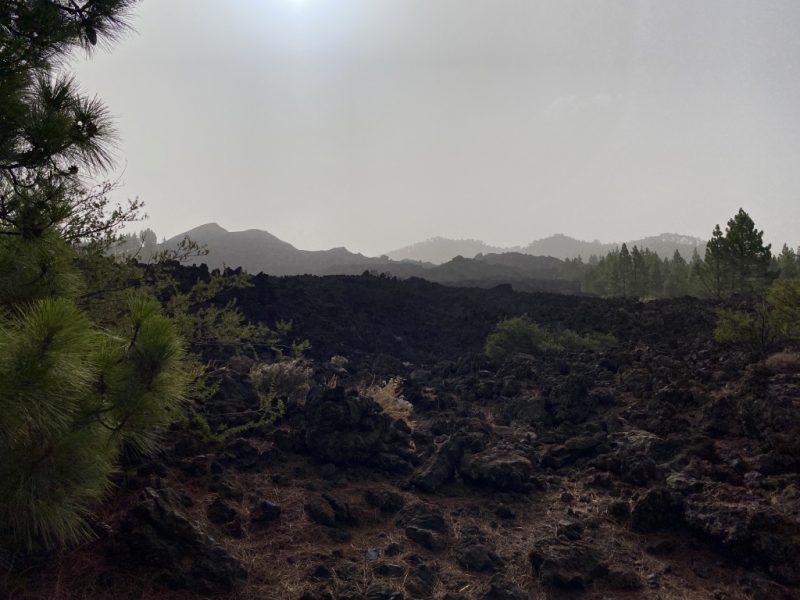 Bild mit Lava, Kiefern und Berge im Hintergrund