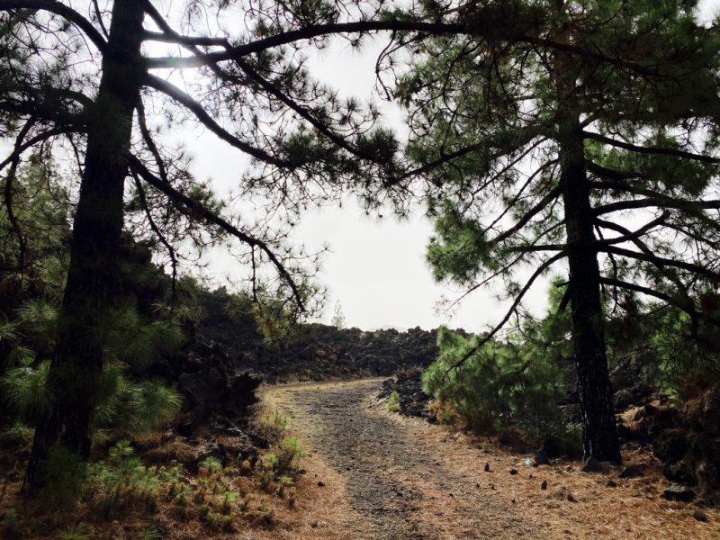 Bild mit Wanderweg, Lava, Kiefern beim Chinyero