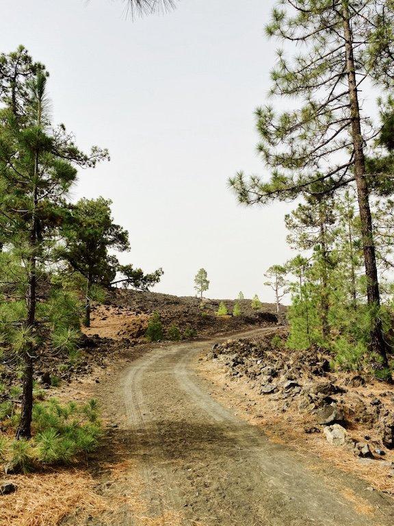 Bild mit Strasse, Lava, Kiefern im Hintergrund