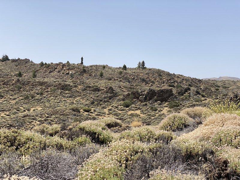 Blick in die Flora und Fauna der Canadas del Teide