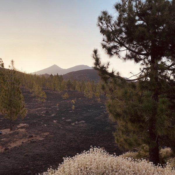 Flora und Fauna im Teide Nationalpark