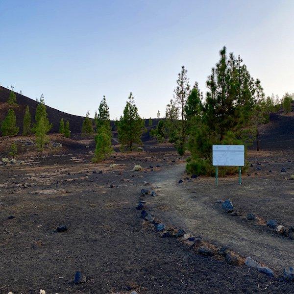 Wanderwerg im Lavafeld mit Kiefern auf Teneriffa