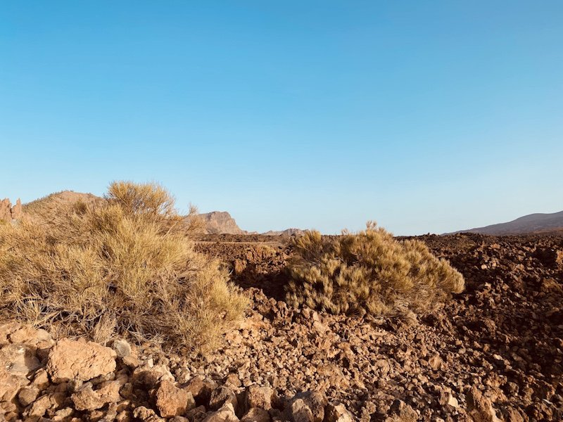 Fauna im Teide Nationalpark