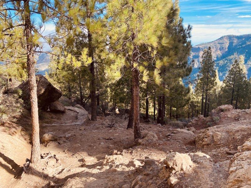 Wanderweg im Wald zum Roque Nublo auf Gran Canaria