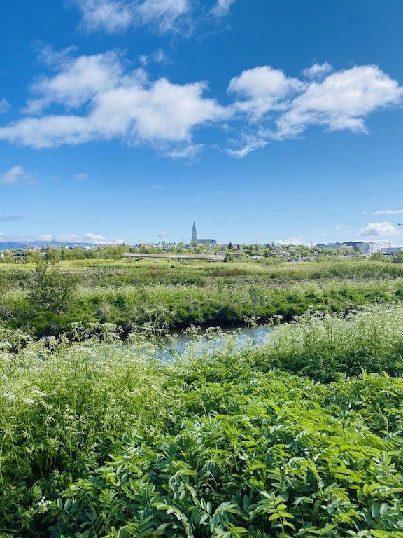 Westisland Roadtrip - Blick auf Reykjavik und Hallgrimskirkja